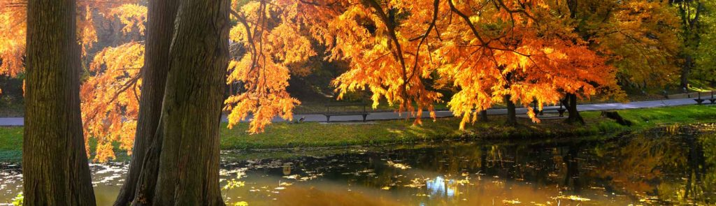 Autumn trees by a lake